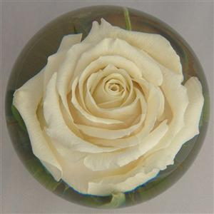 Simply Rose Elegance Flower Paperweight
