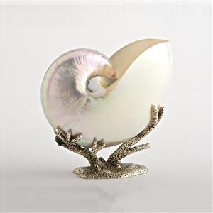 Arcadia - Medium Pearl Nautilus On Coral Base
